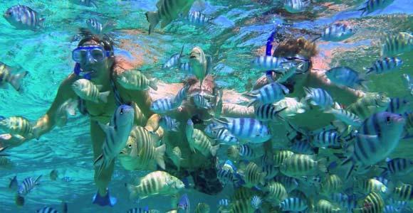Snorkeling Bali Tanjung Benoa Marine Recreation Tours