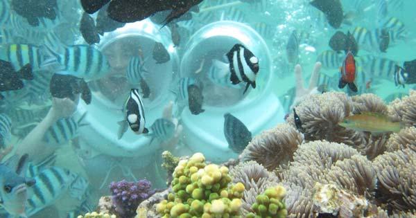 Bali Seawalker Tour Experience At Sanur