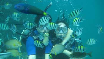 Introductory Scuba Dive In Tanjung Benoa Bali