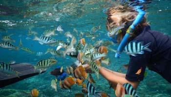 Tanjung Benoa Beach Snorkeling