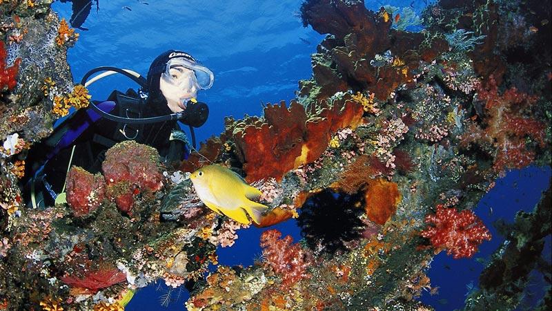 Tulamben Liberty Shipwreck Dive Price