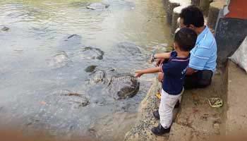 Turtle Island Tour In Tanjung Benoa Bali