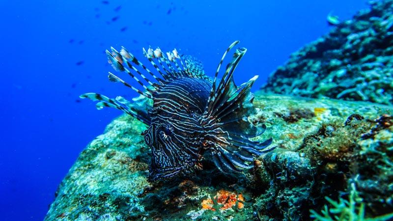 The Beauty of the Underwater World Gili Trawangan