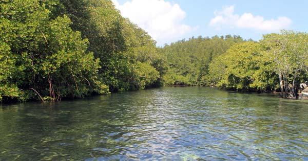 Mangrove Forest Tanjung Benoa