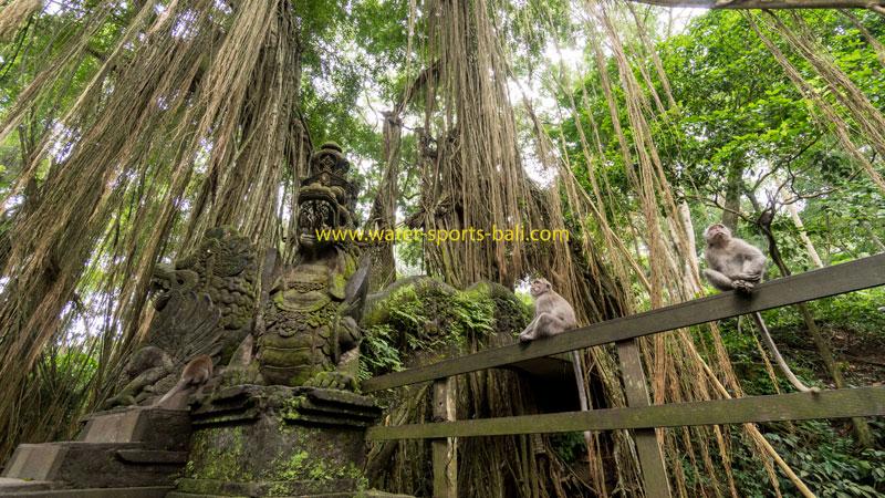 Sacred Monkey Forest Sanctuary Bali