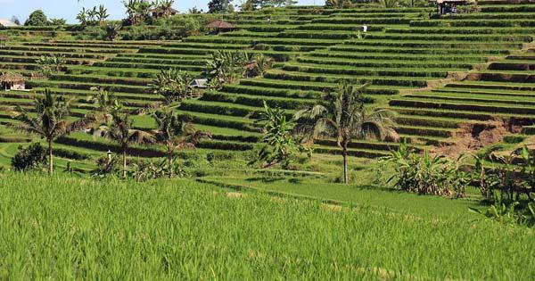 Jatiluwih Green Land Bali