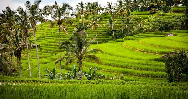 Jatiluwih Rice Field Tabanan Bali