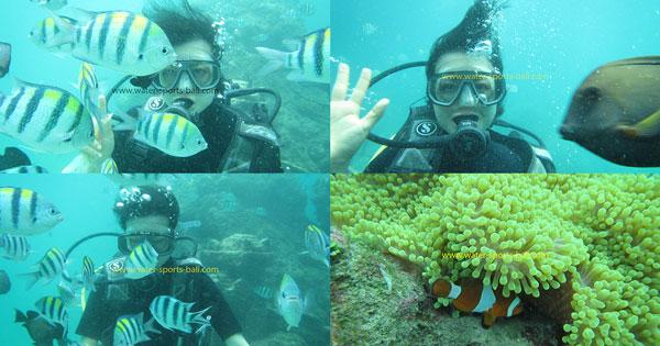 Beginner Bali Scuba Diving Price