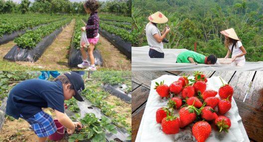 Bali Strawberry Panoramic Terrace