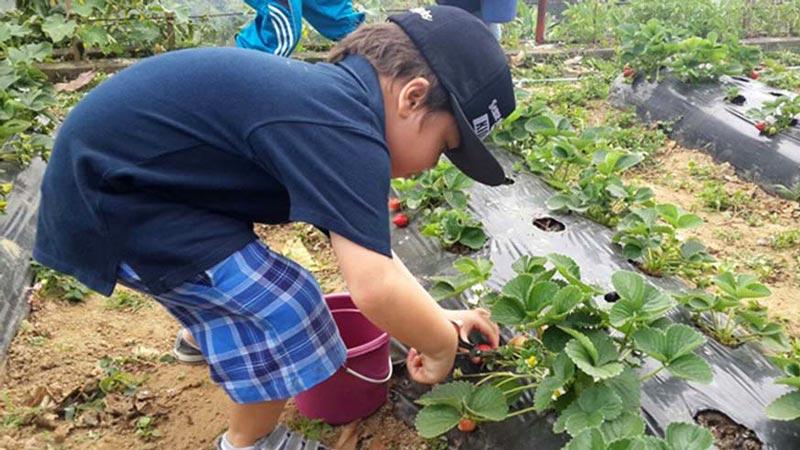 Tourist Activities at Bedugul Strawberry Farm