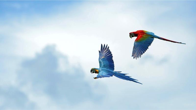Flying Bird Show