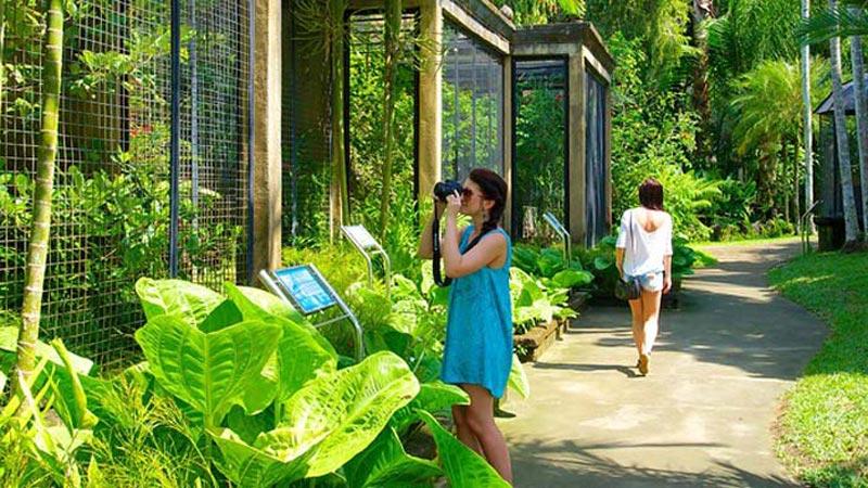 Interesting Things At Bali Bird Park
