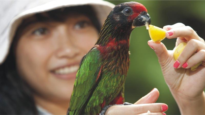 Papua Rainforest Feed