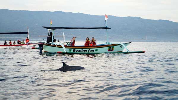 Dolphin On The Lovina Beach